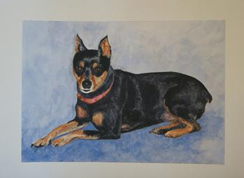 Dog portrait, miniature pinscher