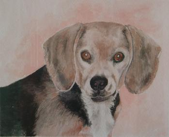 Dog portrait, beagle